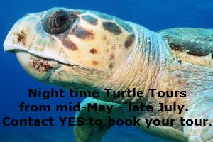 Yakushima Turtle Tour