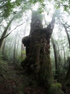 yes yakushima tours